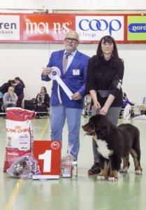 BIS Valp, Berner Sennenhund