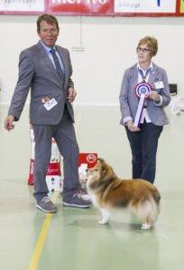 Best In Show, Shetland Sheepdog